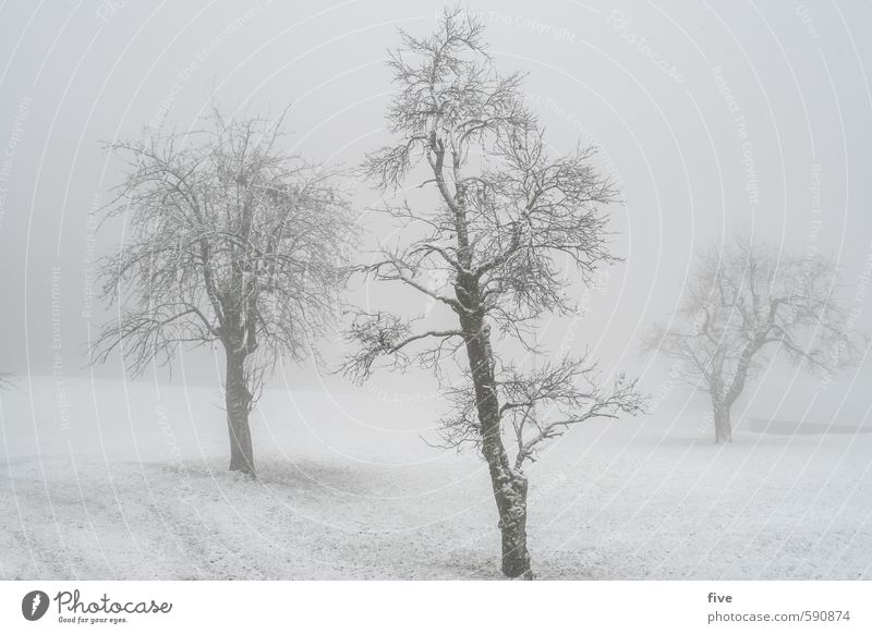 Foggy Environment Nature Landscape Clouds Winter Weather Bad weather Ice Frost Snow Snowfall Plant Tree Grass Foliage plant Meadow Field Hill Cold