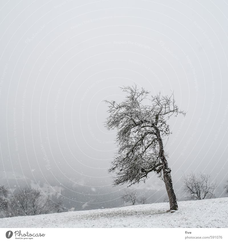 Sky Nature Plant Tree Landscape Clouds Winter Forest Cold Environment Mountain Meadow Snow Grass Rock Earth