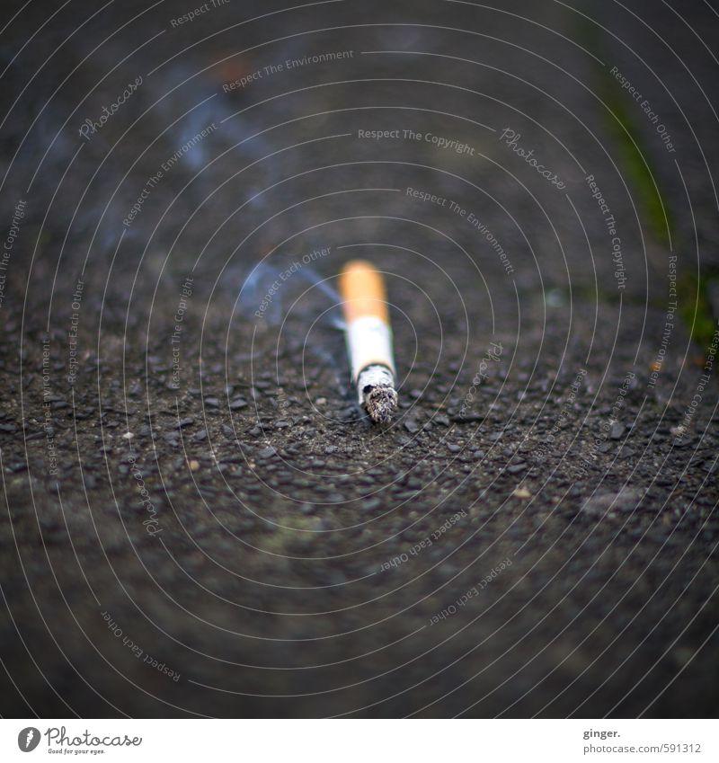 Street Gray Lie Wind Smoking Asphalt Trash Smoke Pavement Burn Cigarette Addiction Environmental pollution Glow Unhealthy Embers