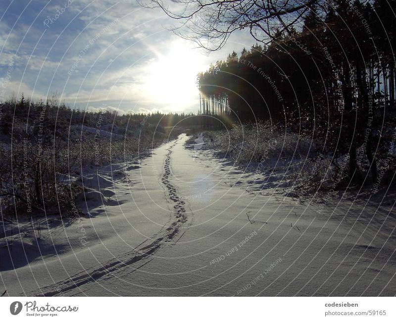 Nature Beautiful White Sun Joy Winter Clouds Animal Forest Snow Freedom Moody Tracks Footprint Remote Visible