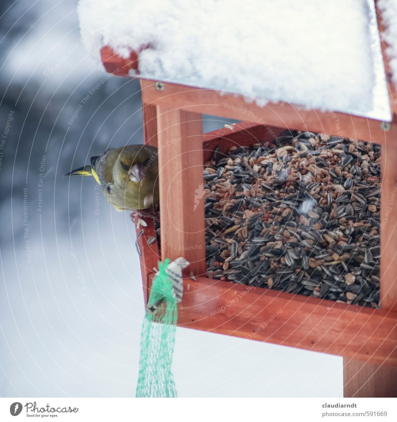 Nature Animal Winter Snow Garden Snowfall Bird Ice Wild animal Observe Frost To feed Feeding Love of animals Birdhouse Birdseed