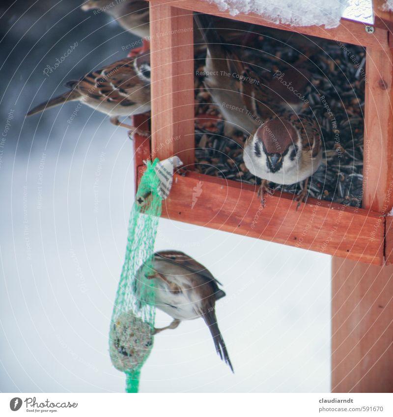 Nature Animal Winter Environment Snow Bird Ice Group of animals Frost To feed Feeding Sparrow Love of animals Birdhouse Birdseed Sunflower seed