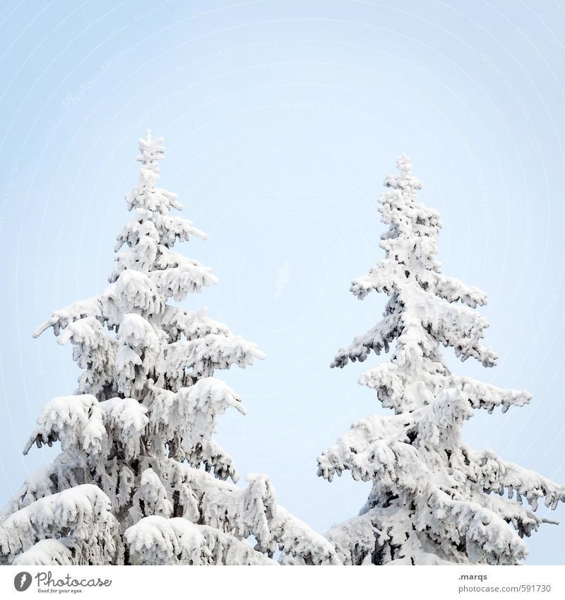 peak Winter vacation Nature Cloudless sky Ice Frost Snow Tree Spruce Treetop Sign Simple Bright Cold Beautiful Seasons Colour photo Exterior shot Deserted