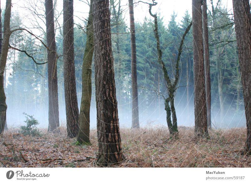 Fog of horror... Forest Tree Creepy Fear