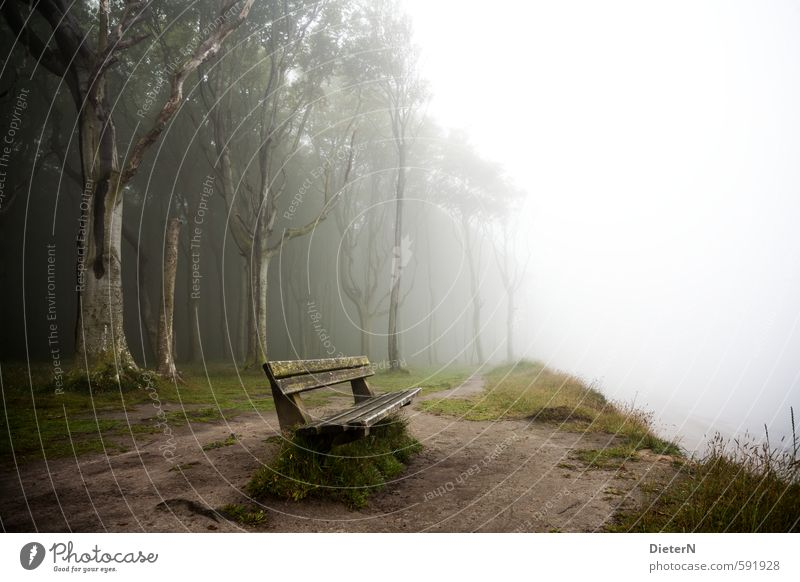 bank of fog Environment Fog Tree Grass Brown Green White Ghost forest Bench Nienhagen Baltic Sea Colour photo Exterior shot Copy Space right Copy Space middle