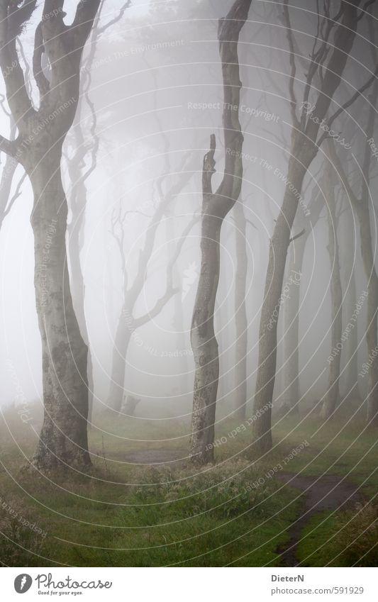 Nature Green Summer Tree Forest Grass Gray Brown Air Fog Baltic Sea Haze Ghost forest