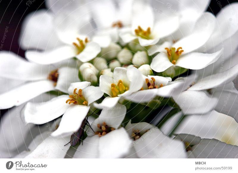 White Flower Green Yellow Blossom Closed Open Beetle Pistil