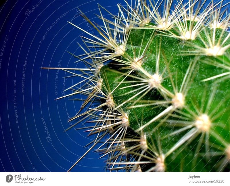 Sharply Stung Green Cactus Large Fresh Exterior shot Macro (Extreme close-up) Close-up Summer Desert Blue Sky Thorn Point Sharp thing