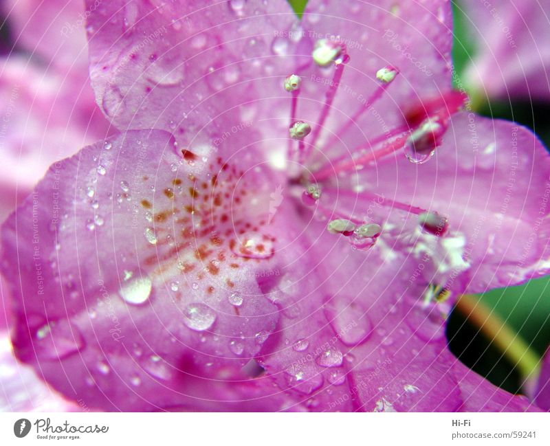 Wet flower Flower Blossom Nature Jump Spring Drops of water Macro (Extreme close-up) Rainwater near name Water