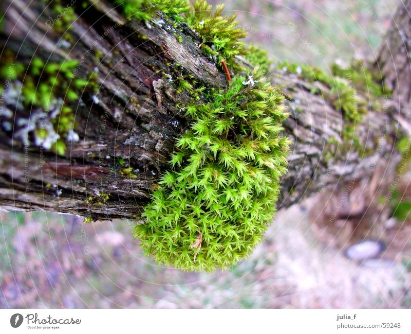 I'm laughing at a branch. Brown Green Plant Tree bark Branch Nature Moss