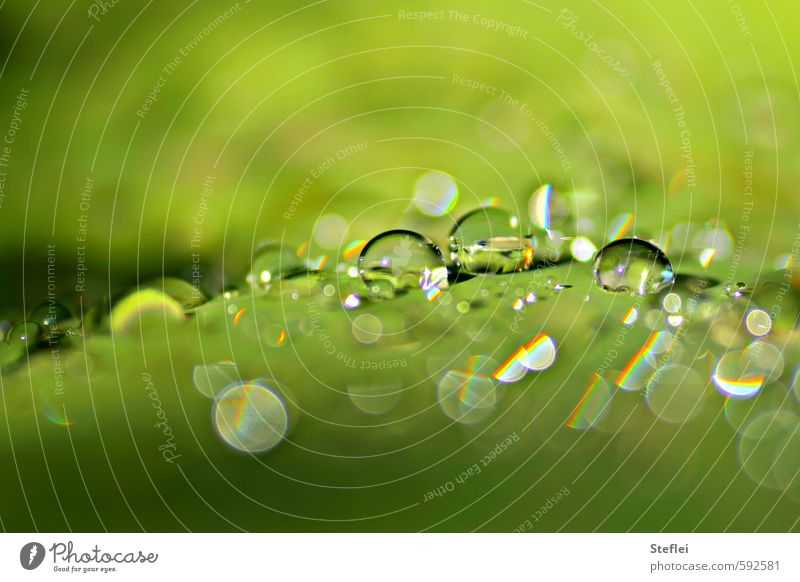 Nature Green Colour Water Plant Small Garden Glittering Elegant Fresh Esthetic Wet Drops of water Observe Clean Round