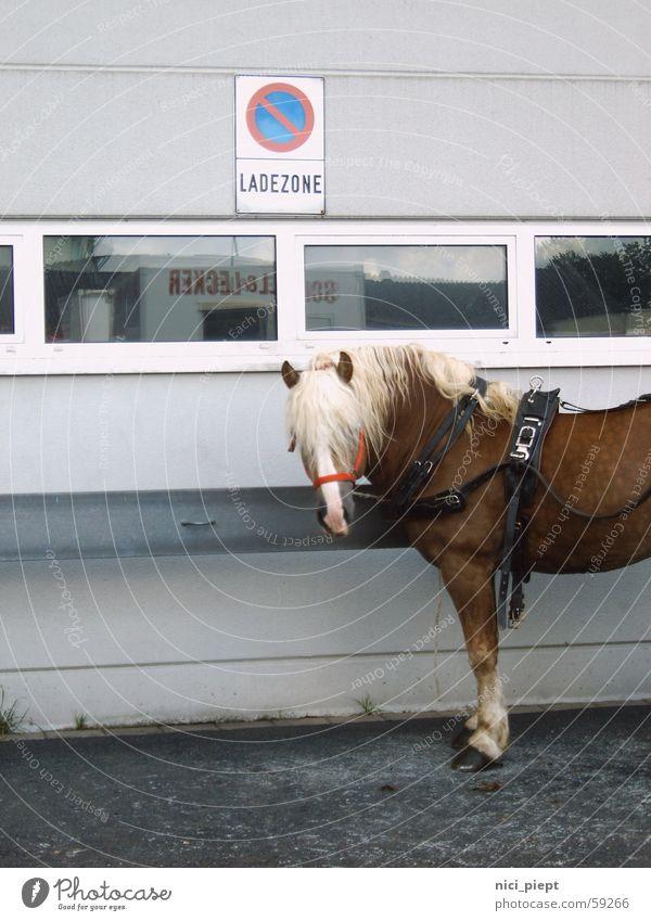 Car Horse Parking Load Unload