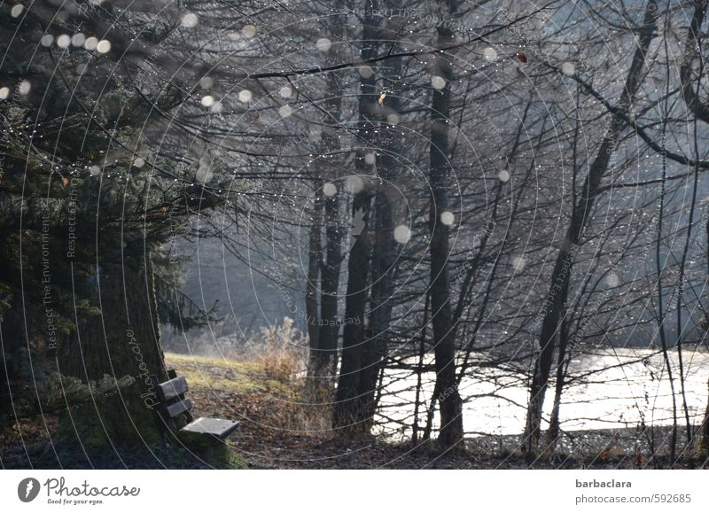 Quiet and rigid lies the lake Nature Landscape Earth Water Drops of water Winter Bushes Forest Coast Pond Lake Bench Glittering Illuminate Dark Bright Moody