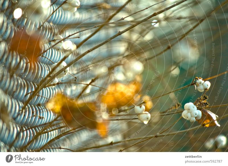 MDZ wallroth Wire netting fence Fence Neighbor Border Real estate Garden Divide Autumn Winter Berries Snowberry Nature Bushes Branch Twig Shallow depth of field