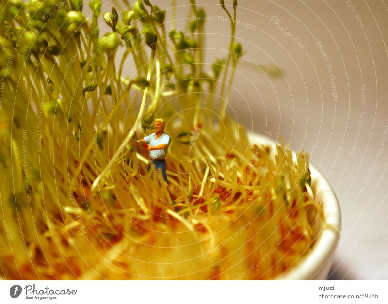 cut Cress Cut Blow Gardening Healthy Harvest away with it fresh on the bread Organic produce
