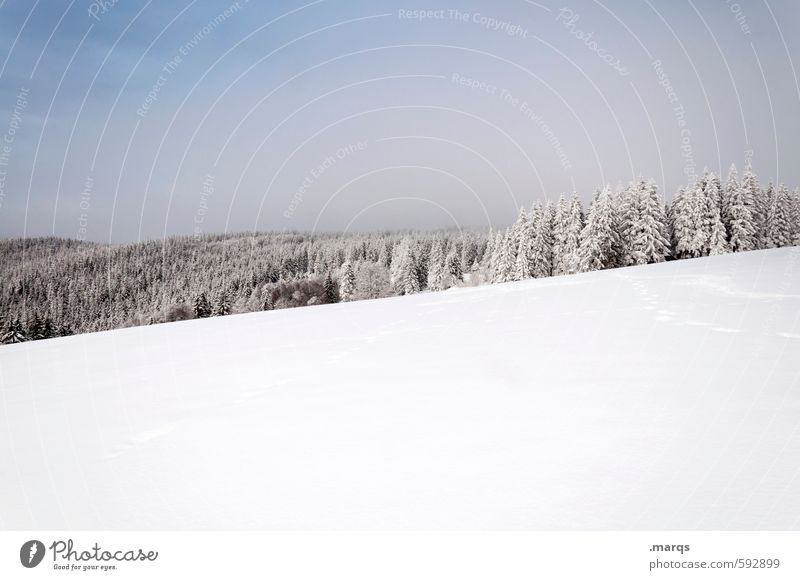 Sky Nature Vacation & Travel Beautiful Loneliness Landscape Winter Cold Forest Snow Bright Earth Elegant Beautiful weather Trip Hill