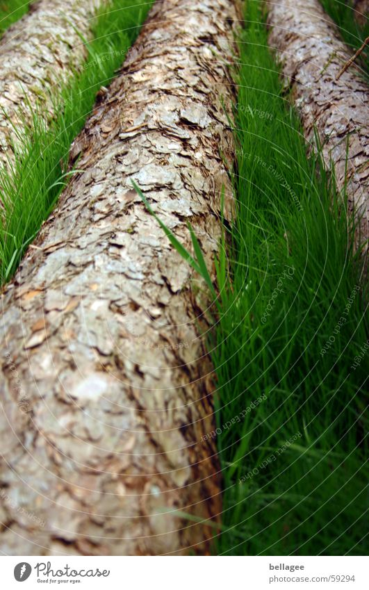Tree Green Meadow Grass Brown 3 Lie Tree trunk Blade of grass Juicy Tree bark Fallen Dull