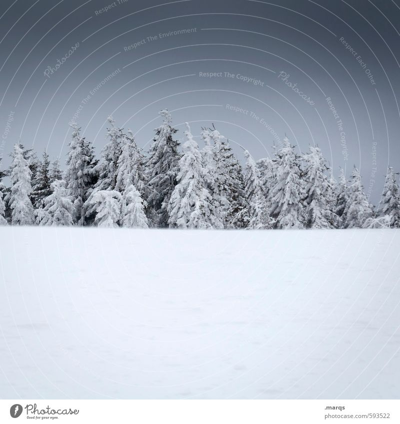 meeting Vacation & Travel Trip Winter Snow Winter vacation Environment Nature Landscape Storm clouds Climate Coniferous trees Simple Cold Loneliness Relaxation