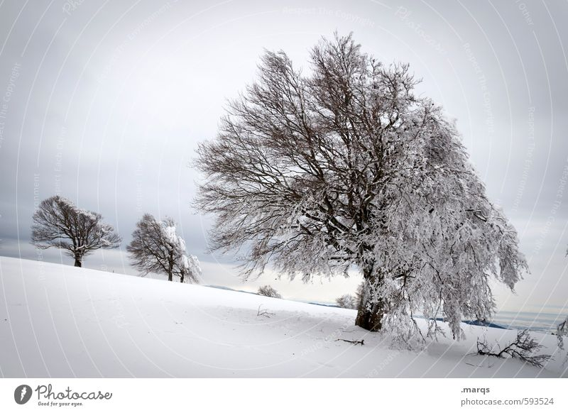 Rigid Trip Winter vacation Nature Landscape Sky Clouds Climate Ice Frost Snow Tree Beech tree Hill Sign Cold Natural Beautiful Moody Seasons Black Forest