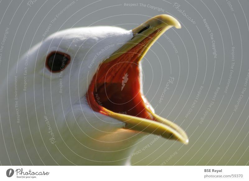 Bird Feather Seagull Beak Norway