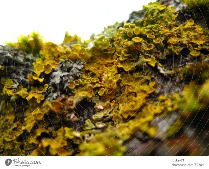 Nature Tree Moss