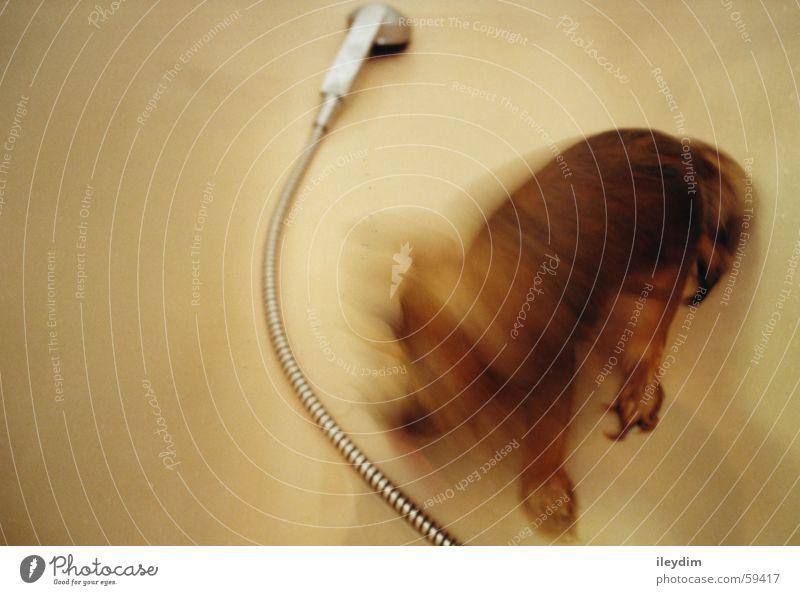 Water Dog Wet Clean Pelt Bathtub Shake Shower head Take a shower