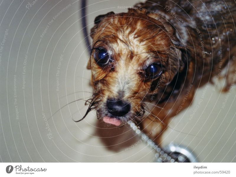 Water Dog Wet Cute Pelt Bathtub Tongue Wash Lick Puppydog eyes Take a shower