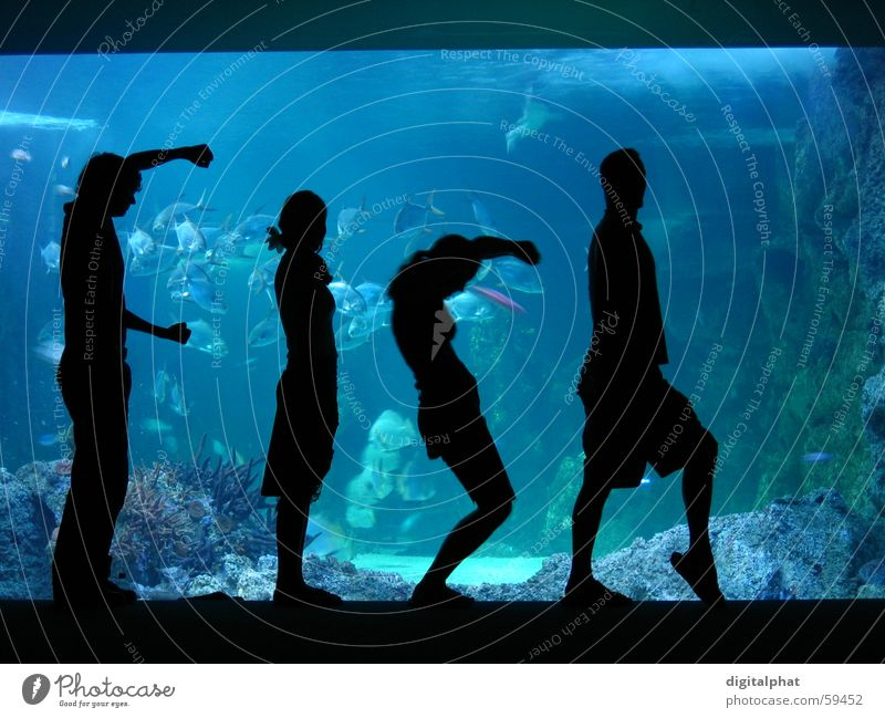 Fish Human being Blue Water Black Body Tourism Exceptional Letters (alphabet) Posture 4 Zoo Word Aquarium