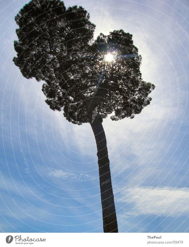 Radiant tree Tree Large Clouds Light Exterior shot Back-light Nature Sky Blue Sun Tree trunk Joy Shadow Beam of light Aura