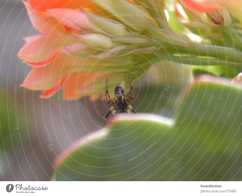 Spider Man Flower Transport Close-up Sun