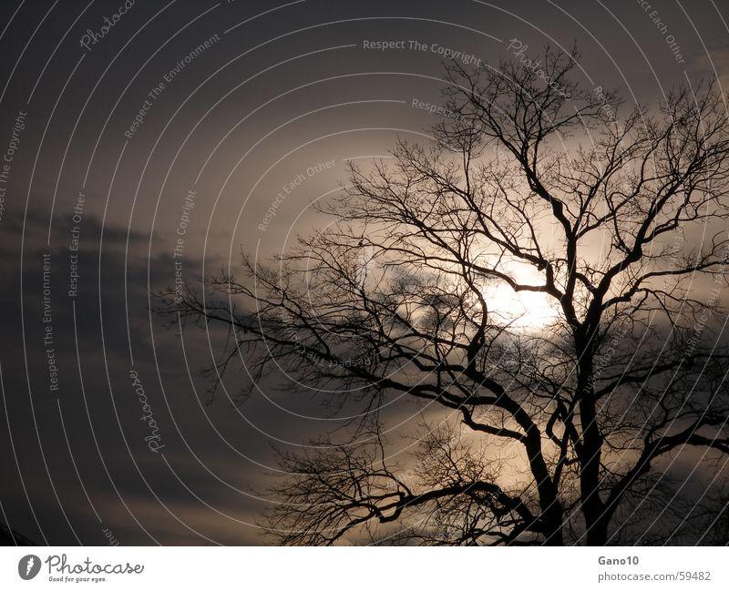 midnightsun Tree Dusk Dark Autumn Winter Hope Fluid Calm Sun evening mood Joy
