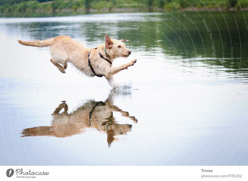 watercourse Animal Water Pet Dog 1 Running Jump Athletic Wild Blue Brown Green Joy Bravery Self-confident Cool (slang) Success Power Esthetic Movement
