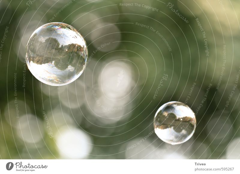 bubble-mirror Elegant Purity Soap bubble Aviation Hover Green Free Reflection Nature Peaceful Bright green Colour photo Experimental Copy Space right Day