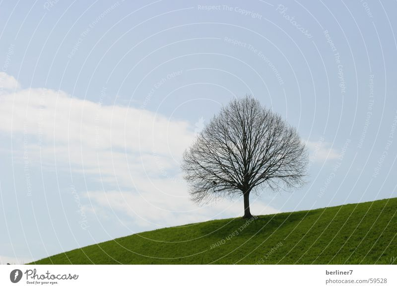 leafless tree in spring Tree Hill Meadow Grass Clouds Green Spring Branch Sky Blue