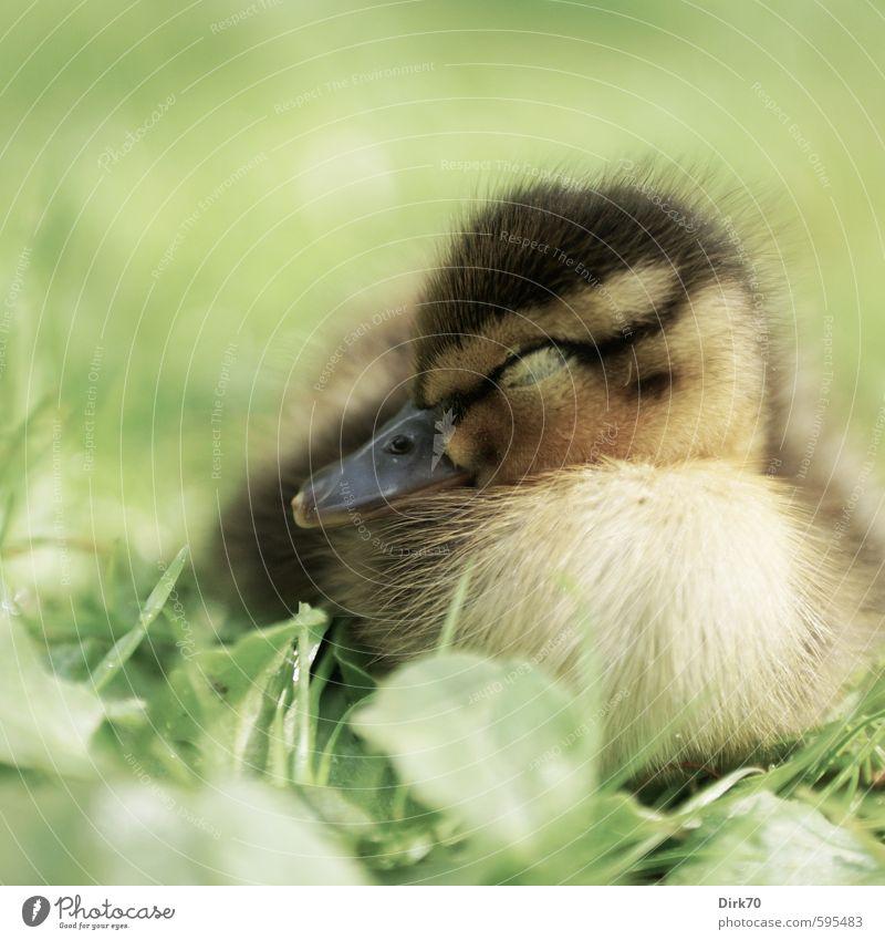 Green Plant Calm Animal Black Yellow Baby animal Life Meadow Grass Spring Brown Lie Dream Bird Park