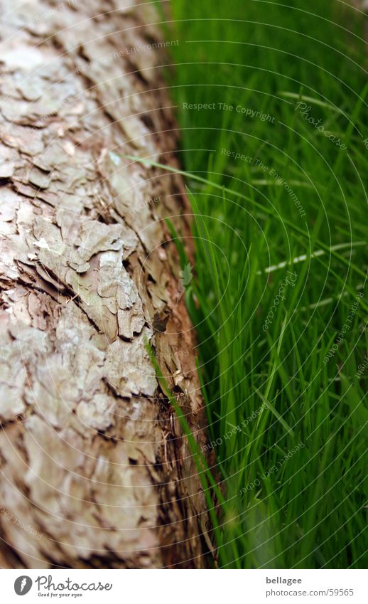 Tree&Grass Tree trunk Tree bark Brown Green Fresh