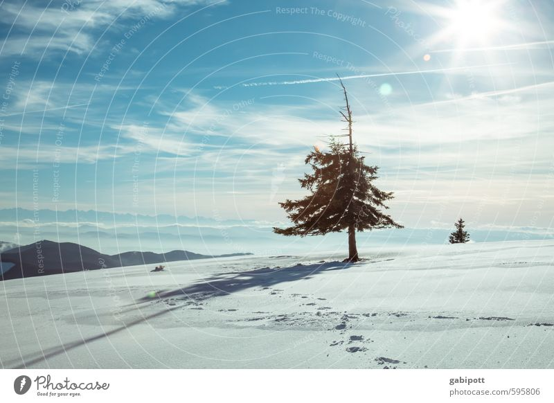Bye Winter Environment Nature Landscape Sky Sun Weather Beautiful weather Snow Plant Tree Fir tree Friendliness Cold Blue White Joie de vivre (Vitality)