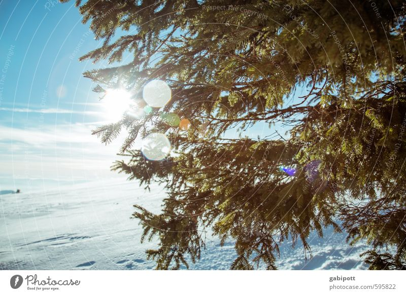 weather | winter review Environment Landscape Sky Cloudless sky Sun Winter Weather Beautiful weather Ice Frost Snow Plant Tree Fir tree Fir branch
