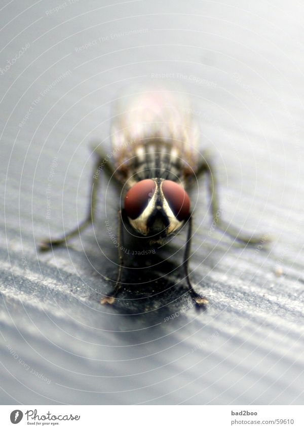 fly takes a break Insect Rest Animal Macro (Extreme close-up) Compound eye Fly Wing Sit Wait Eyes face Legs