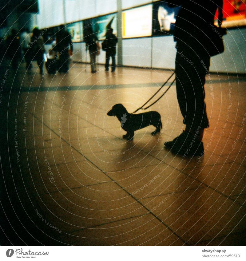 Dark Dog Legs Wait Rope Airport Medium format Friendship Love of animals Dachshund Animal lover