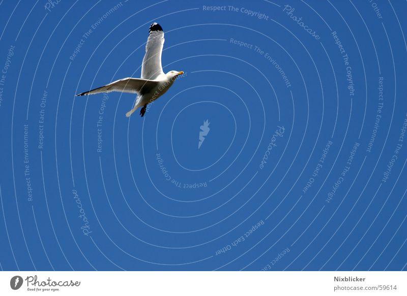 Free flight Beach Ocean Summer Flying seagull Sky Beautiful weather Freedom