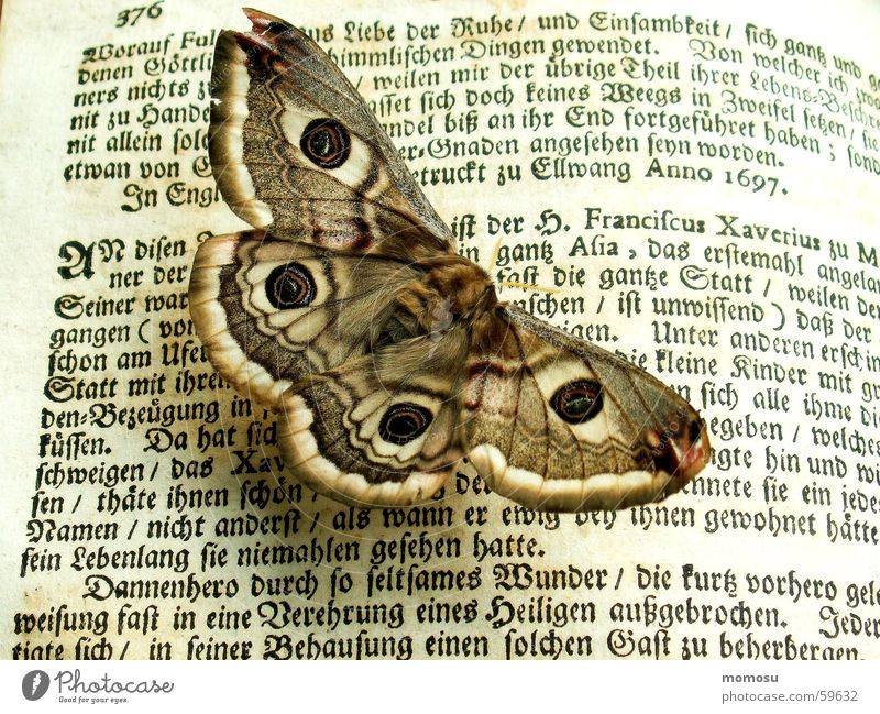 Old Book Reading Characters Letters (alphabet) Butterfly Ancient Giant peacock moth