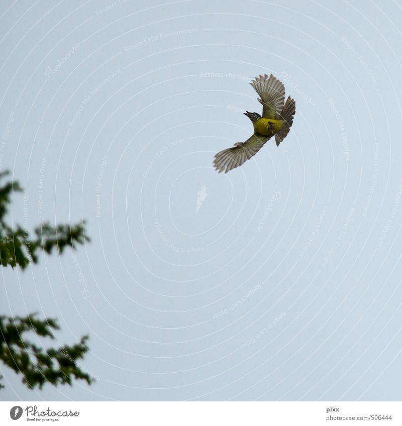 Sky Nature Blue Green Summer Animal Yellow Small Air Bird Flying Elegant Speed Feather Wing Joie de vivre (Vitality)