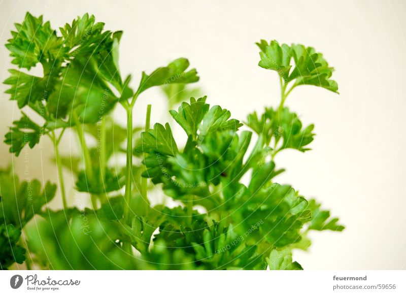 Now it's getting better... Parsley Herbs and spices Foliage plant Healthy Nutrition Food Plant Green Vegetable Cooking Macro (Extreme close-up) Deserted