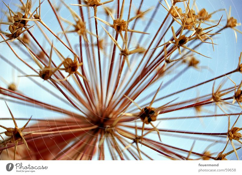 ...wintered... Blossom Plant Dry Dried Flower Winter activities Seed