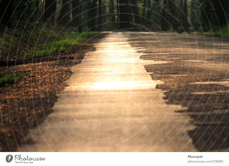 Lead me to the gravel Visual spectacle Sunset Forest Summer Glimmer Relaxation Lanes & trails Evening Gold Happy