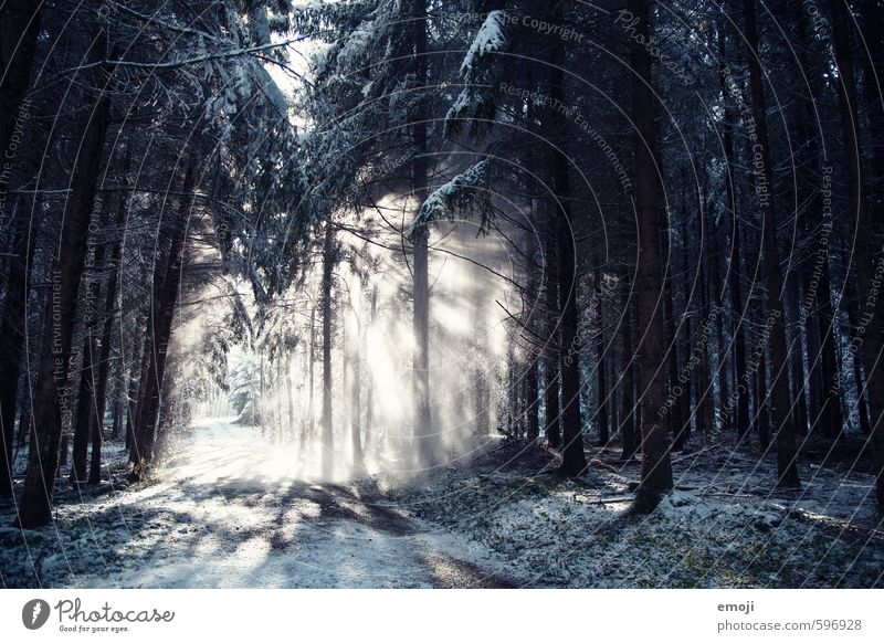 transcendental Environment Nature Landscape Plant Winter Snow Snowfall Tree Forest Cold Natural Blue Colour photo Subdued colour Exterior shot Deserted Day