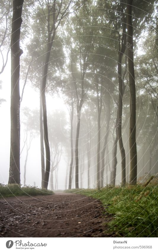 Green White Summer Tree Landscape Forest Lanes & trails Grass Coast Brown Air Fog Baltic Sea Bad weather Leaf canopy Ghost forest