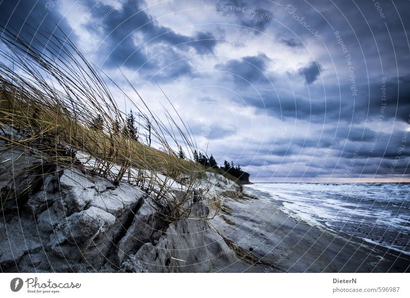 tempest Landscape Earth Sand Water Sky Clouds Storm clouds Horizon Winter Weather Wind Gale Tree Grass Baltic Sea Ocean Blue Brown White Colour photo