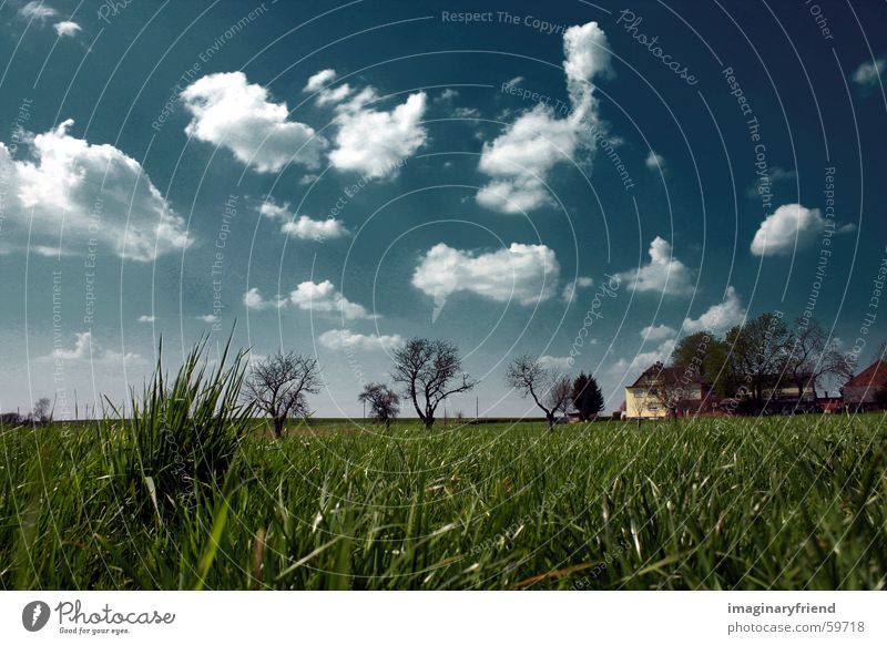 Sky Tree House (Residential Structure) Clouds Meadow Grass Landscape Field Countries